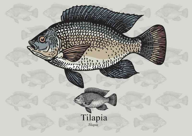 shutterstock 448273483 - Warning: Consuming Tilapia Could Cause Health Problem, Experts Explain