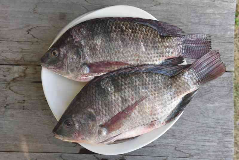 shutterstock 562114426 - Warning: Consuming Tilapia Could Cause Health Problem, Experts Explain