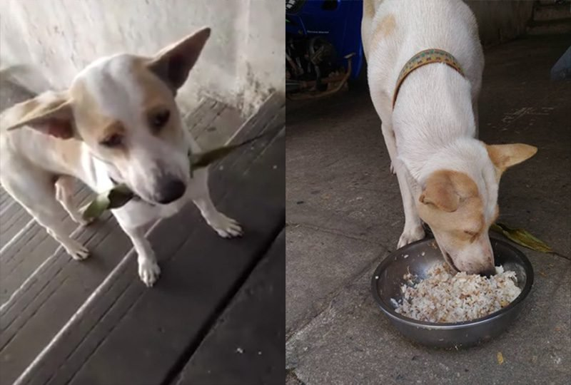 Image result for This Cute Stray Dog Daily Brings A New Gift For The Lady Who Fed Her