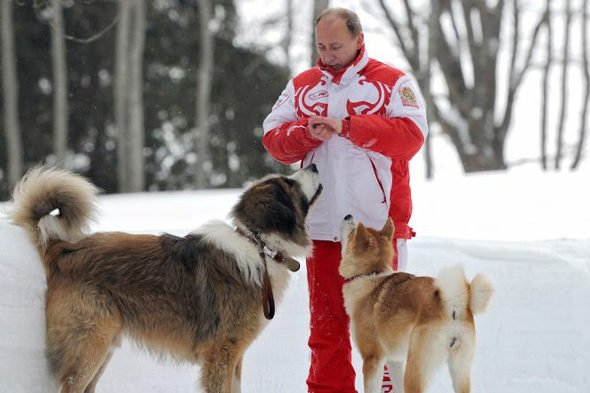 柴犬 プーチン大統領에 대한 이미지 검색결과