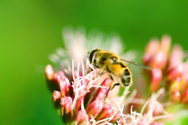 abeja-en-flores_1160-257