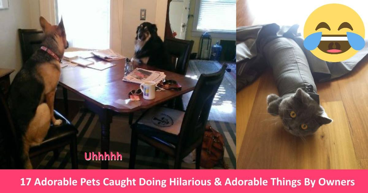 adorablepets - 17 Adorable Pets Caught Doing Hilarious & Adorable Things By Owners