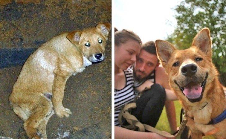 adotadog.jpg?resize=412,232 - 15 fotos comoventes de cachorrinhos antes e depois de serem adotados