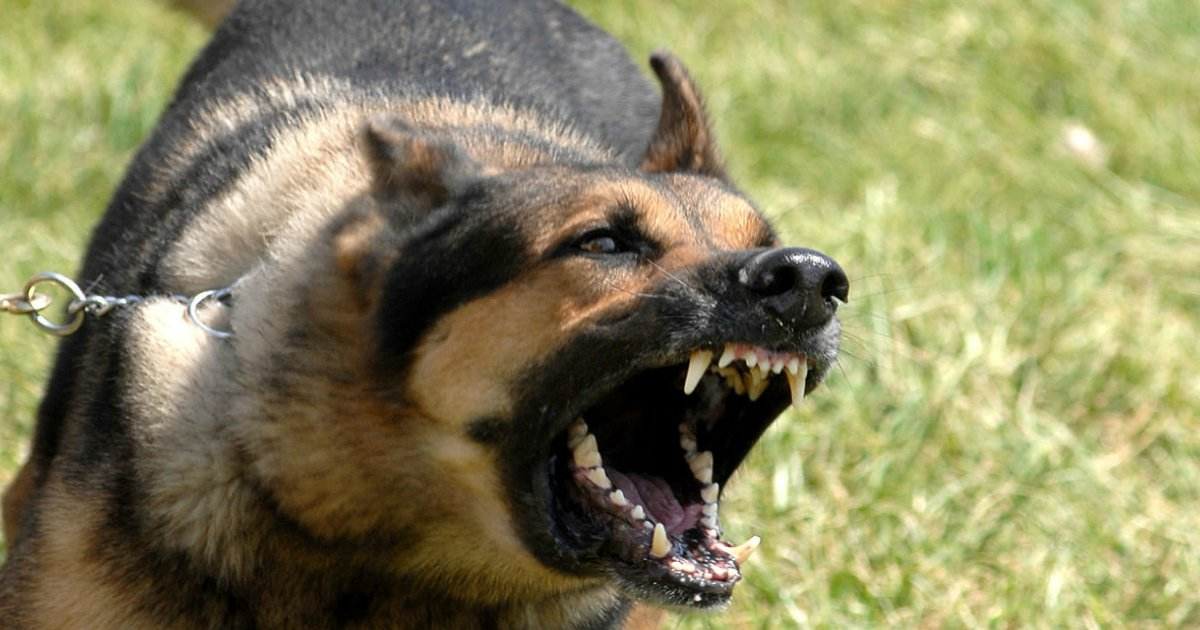 angry dog.jpg?resize=300,169 - Cops Handle Violent Dog That's Attacking Woman's Car