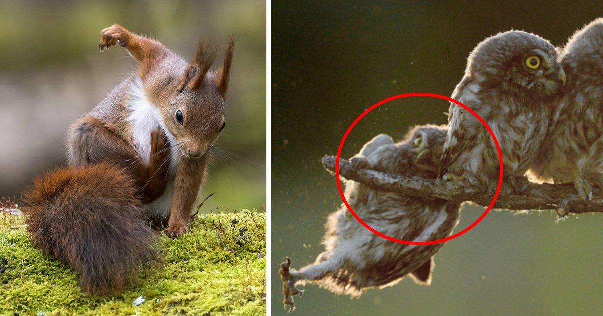 animaldo.jpg?resize=412,232 - As imagens de animais mais divertidas de 2017