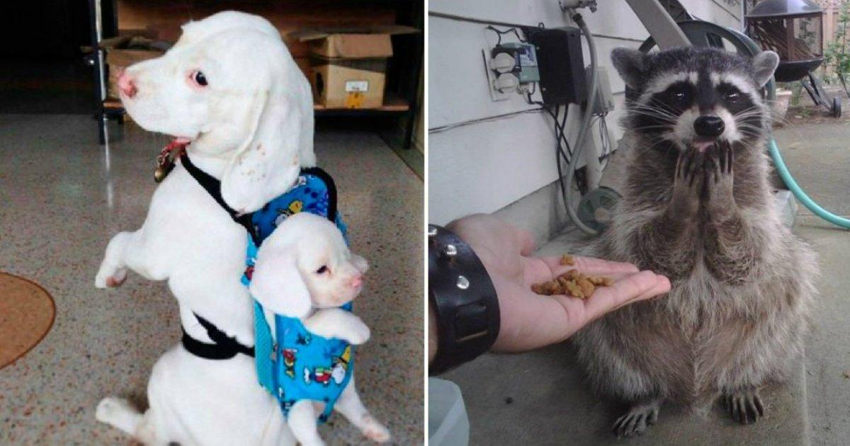 animalfin - Essas fotos adoráveis de animais em momentos únicos irão alegrar o seu dia!