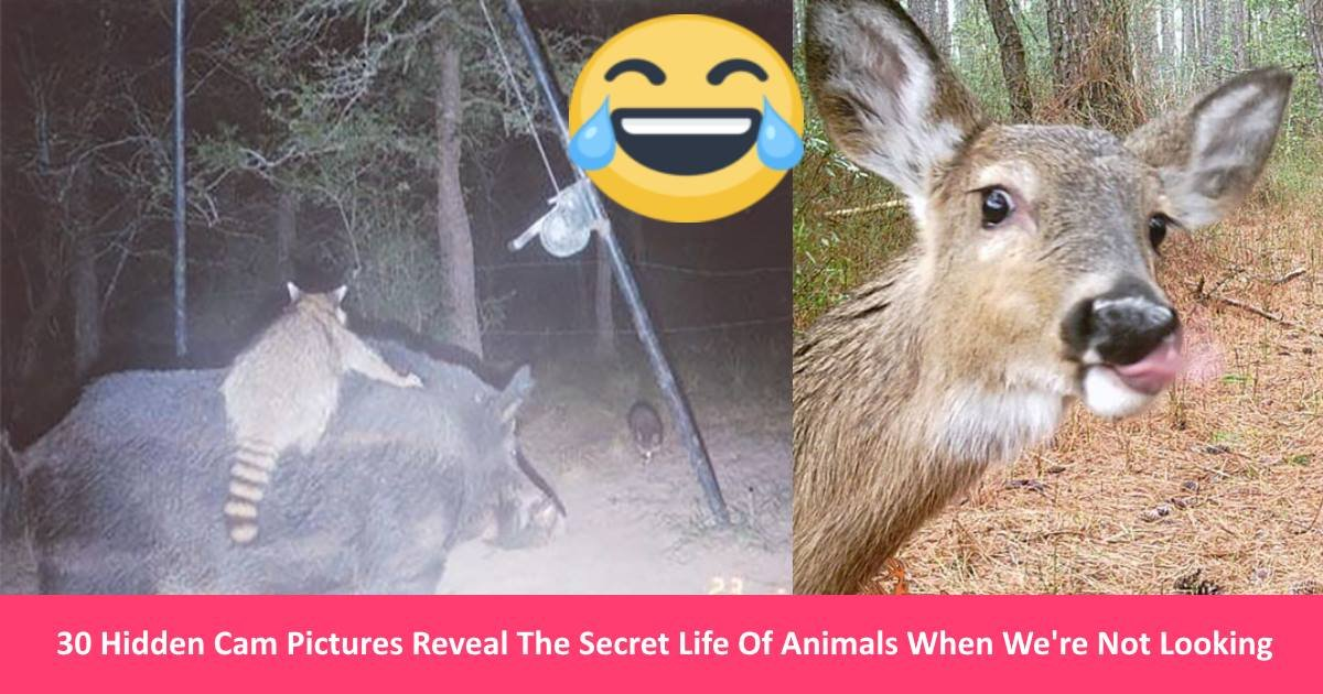 animalfun.jpg?resize=1200,630 - 30 Hidden Cam Pictures Reveal The Secret Life Of Animals When We're Not Looking