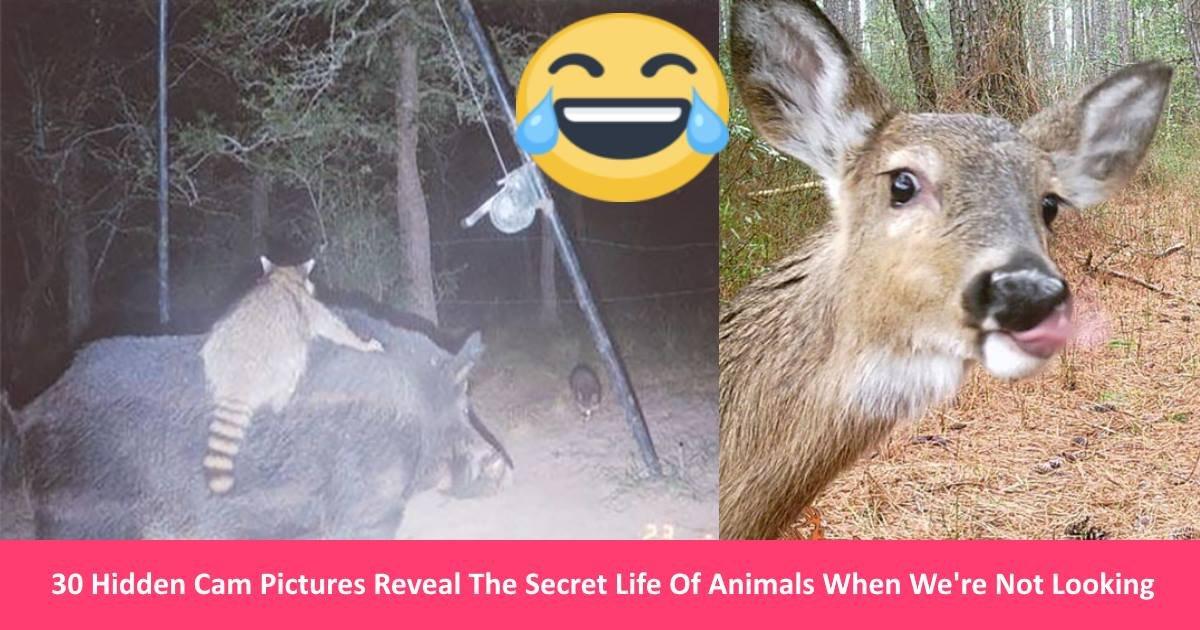 animalfun - 30 Hidden Cam Pictures Reveal The Secret Life Of Animals When We're Not Looking