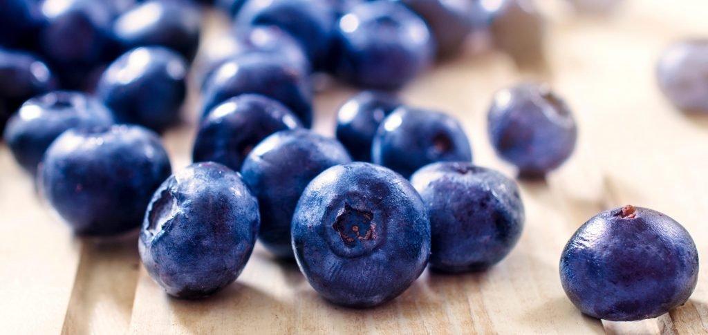 blueberry_plogger_ir_-3-1024x485