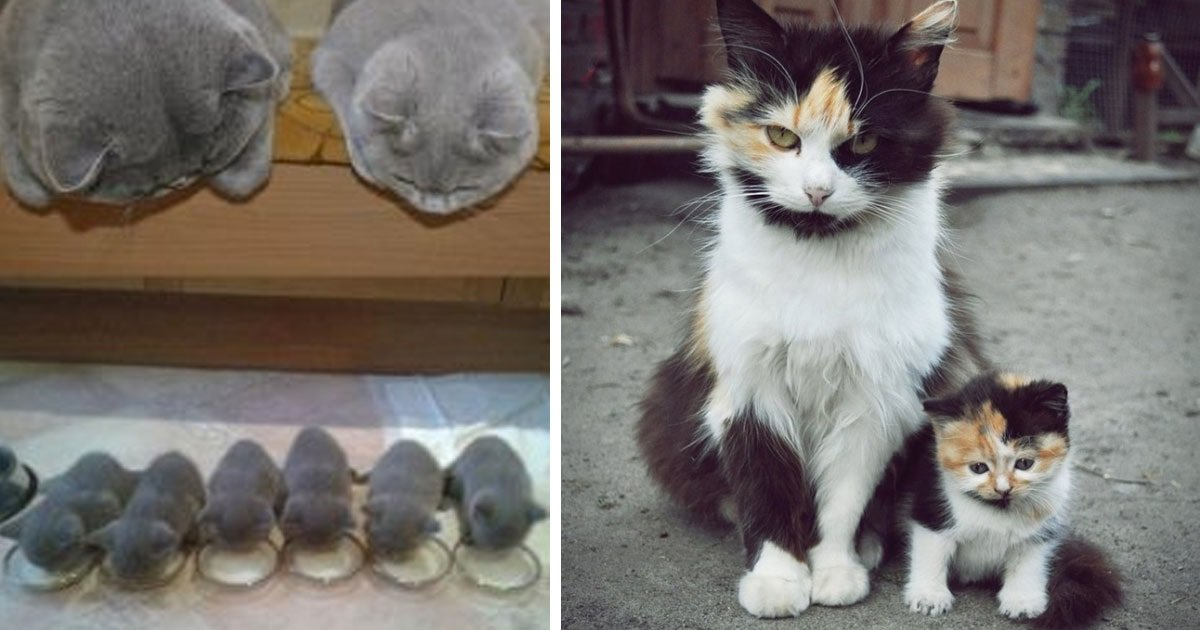 cats_who_have_miniature_versions_featured