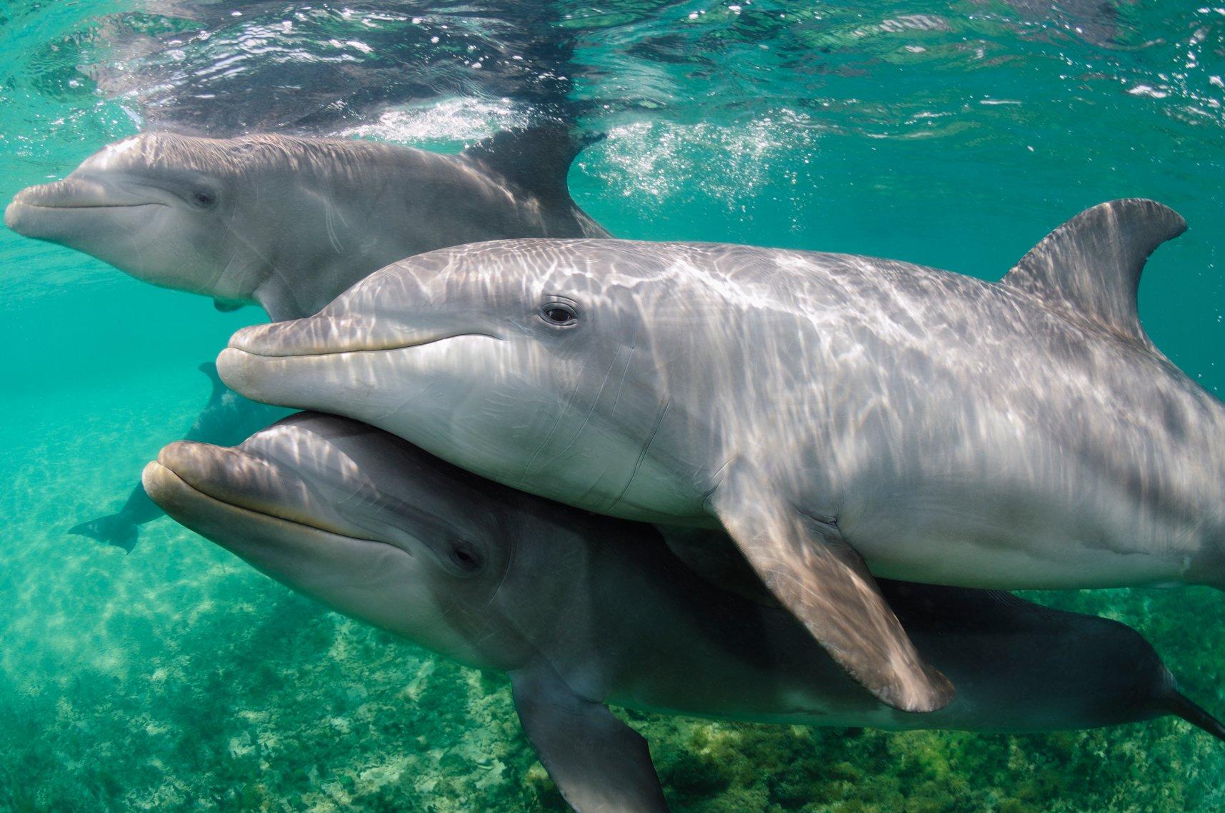 como se reproducen los delfines 1 - 15 increíbles datos curiosos que nunca imaginaste, ¡te van a sorprender!