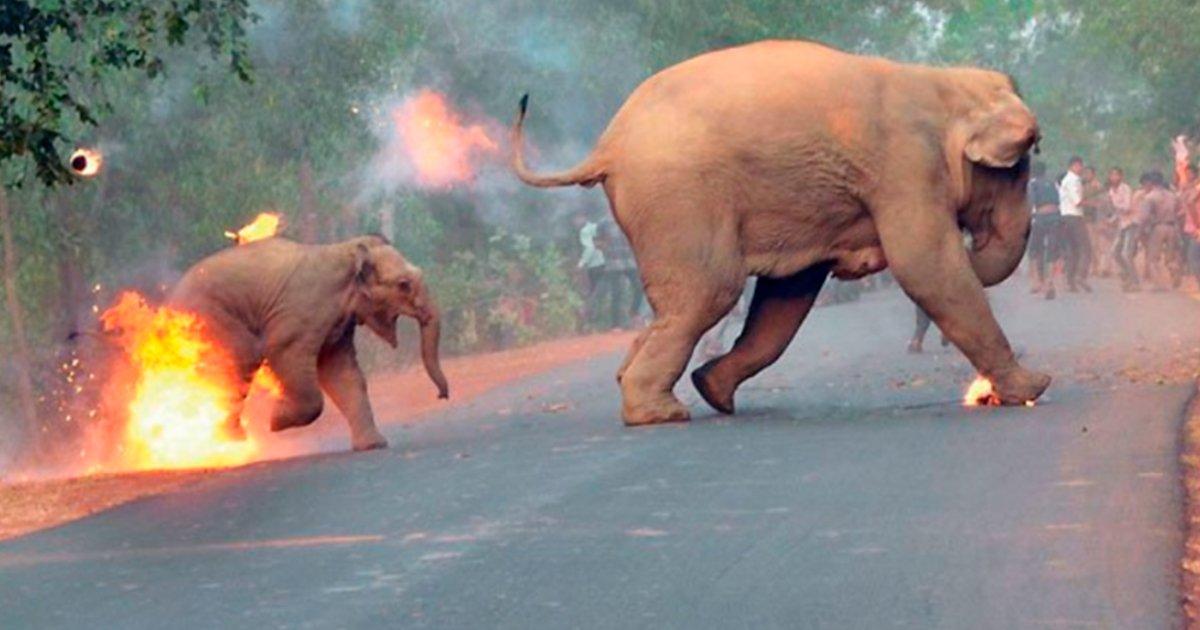 cover 15.jpg?resize=1200,630 - Un fotógrafo publica una aterradora imagen de personas prendiendo fuego a elefantes en la India