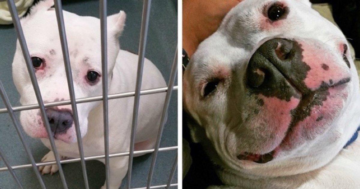 cover 23.jpg?resize=412,232 - 15 conmovedoras fotos de perros antes y después de ser adoptados, su vida cambió completamente.