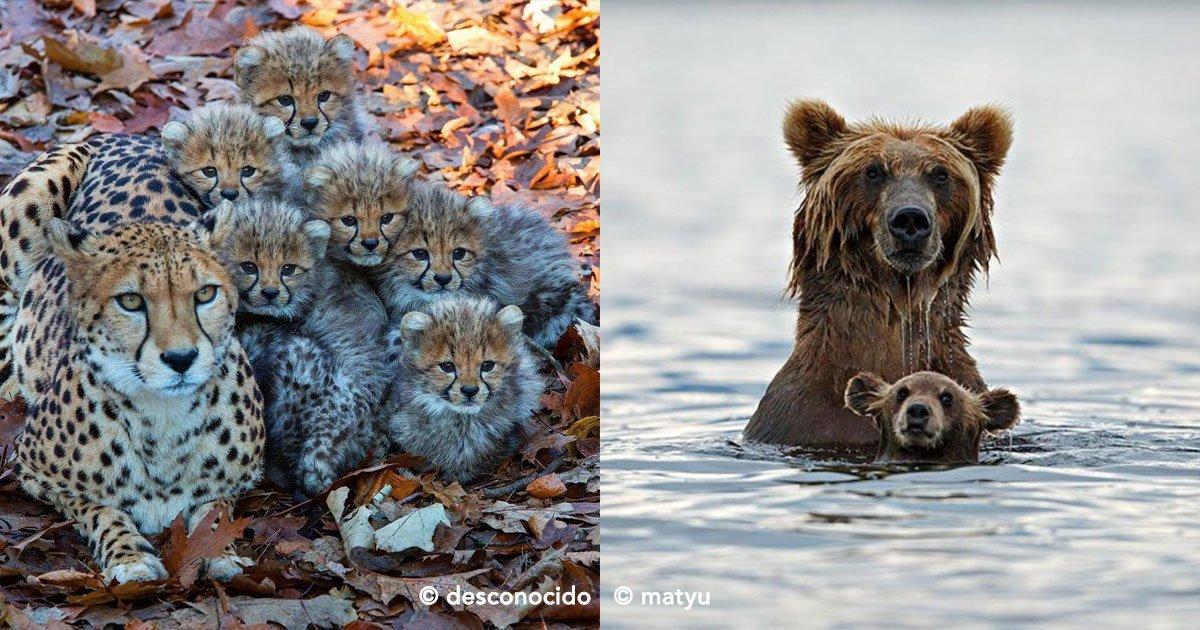 cover 32.jpg?resize=1200,630 - Estas 18 imágenes de animales con sus crías te encantarán, el amor de padres es fabuloso