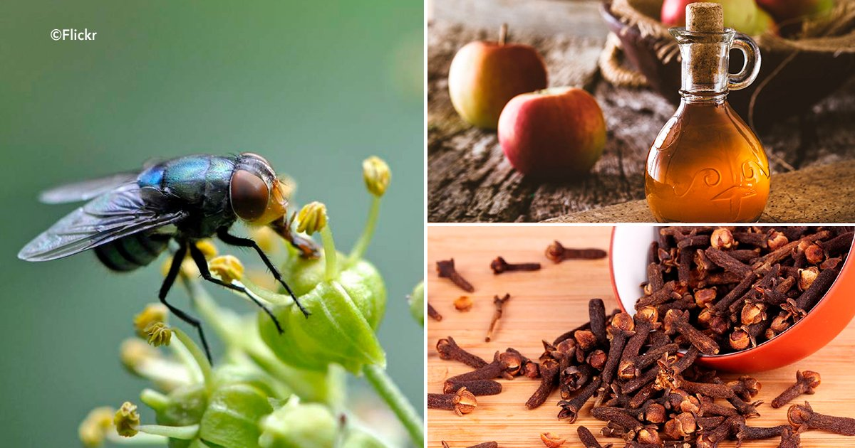 cover 56.jpg?resize=412,232 - 5 tips para alejar a los insectos de tu vida