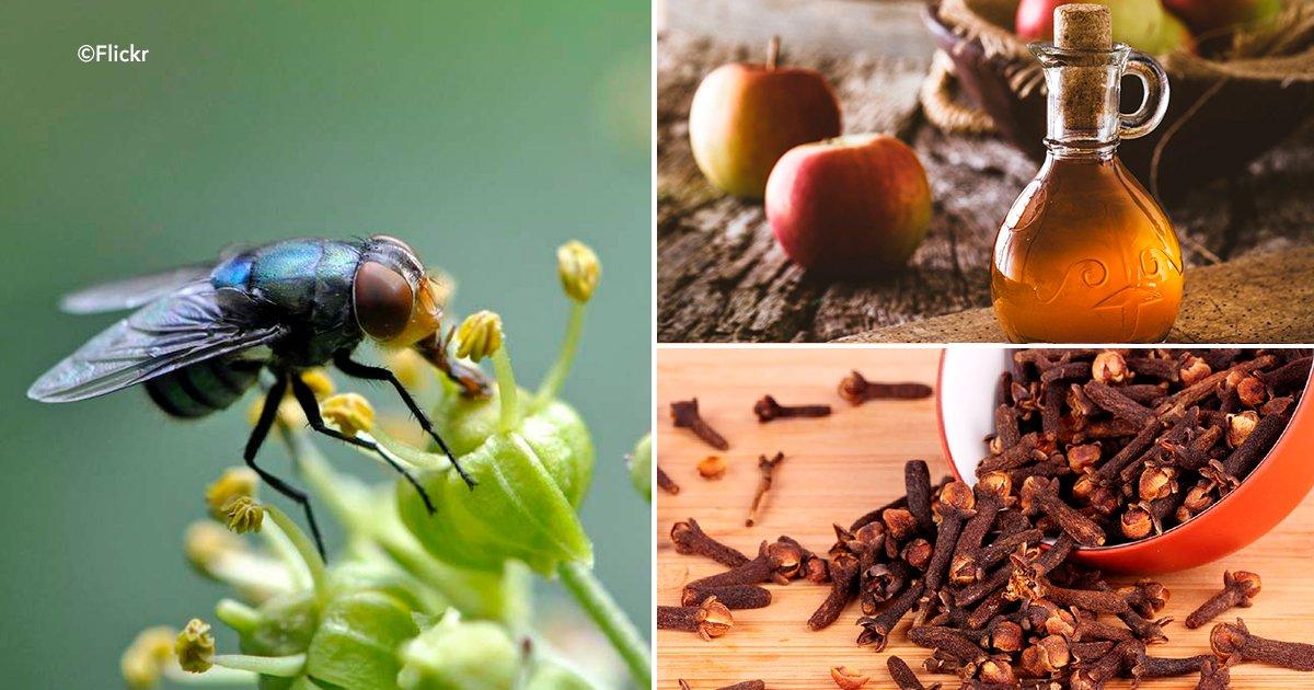 5 tips para alejar a los insectos de tu vida va a gustarme - Como ahuyentar los mosquitos ...