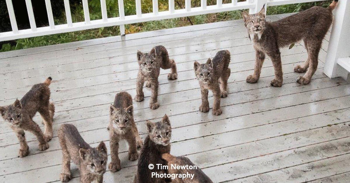 cover.png?resize=1200,630 - Un grupo de animales salvajes se ponen a jugar en el patio de un hombre, él capturó el momento en fotos.