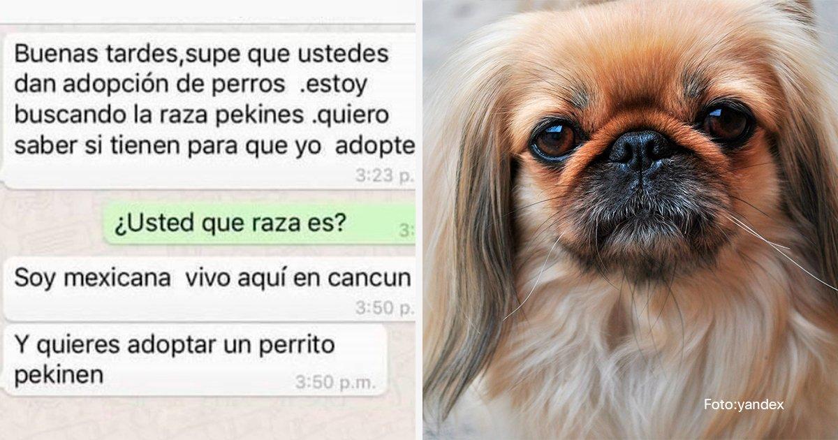 cover45.jpg?resize=1200,630 - Una mujer quiere adoptar un perro de raza y recibe un mensaje impactante
