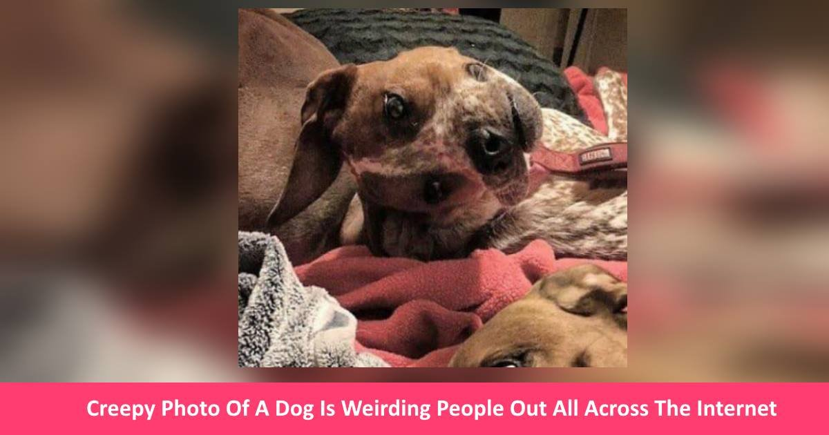 creepydogphoto - Creepy Photo Of A Dog Is Weirding People Out All Across The Internet