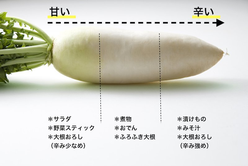 Image result for 大根