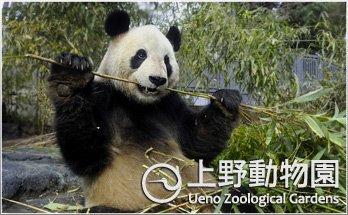 上野動物園에 대한 이미지 검색결과