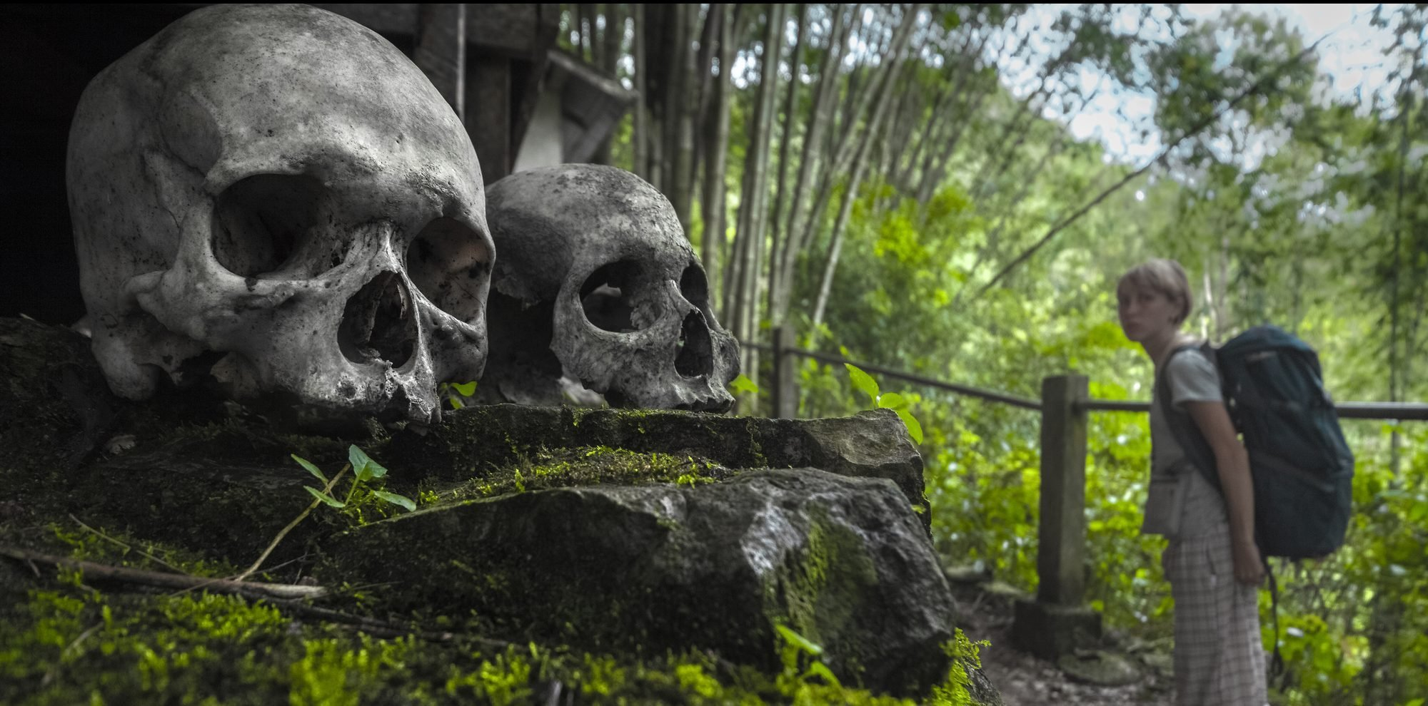 Skulls in Tana Toraja's traditional cemetery in a forest and tourist with backpack. Sulawesi island, Indonesia