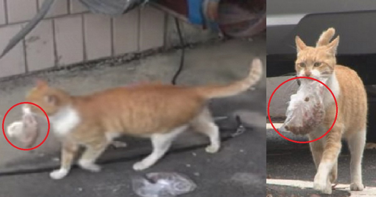 diana 3.png?resize=300,169 - This Stray Cat Only Eats Food Packed In A Bag. Woman Investigates Why.