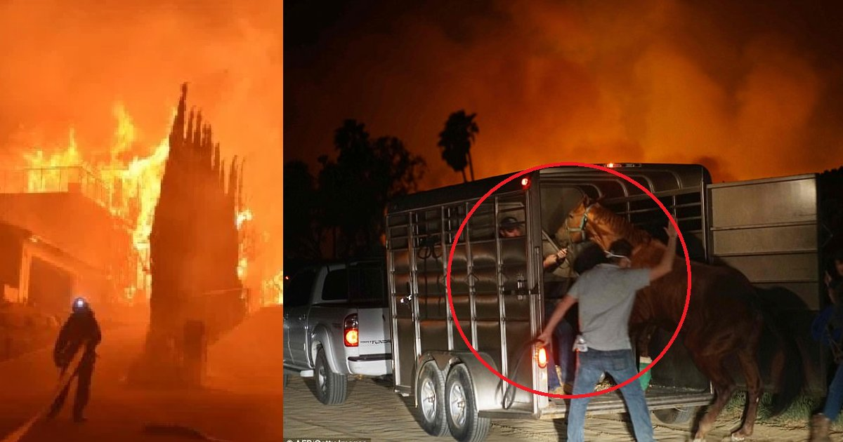 diana 8.png?resize=300,169 - 500 Racehorses Saved From Devastating Thomas Fire Thanks To These Heroes