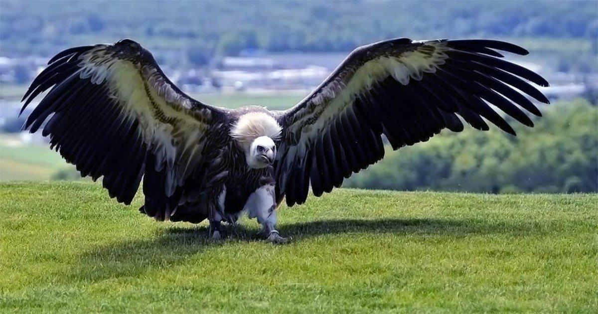 dinoanimals.jpg?resize=1200,630 - 인간을 통째로 집어 삼킬 수 있는 지구 역사상 가장 큰 새의 정체