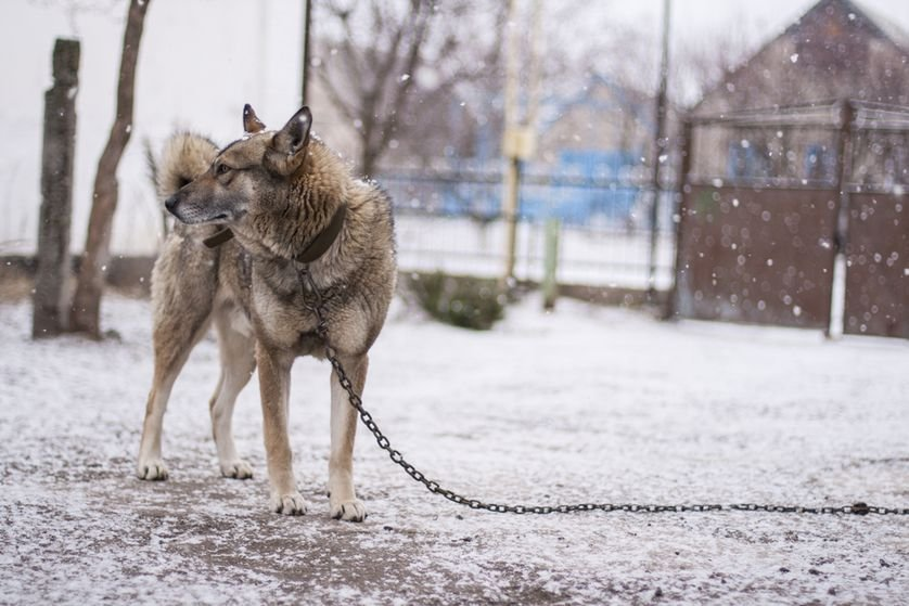 _dog_tethered_outside_snow-jpg-838x0_q80
