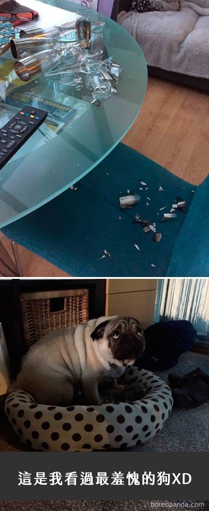 dogs-funny-snapchats-108-5a325156e4f50__700