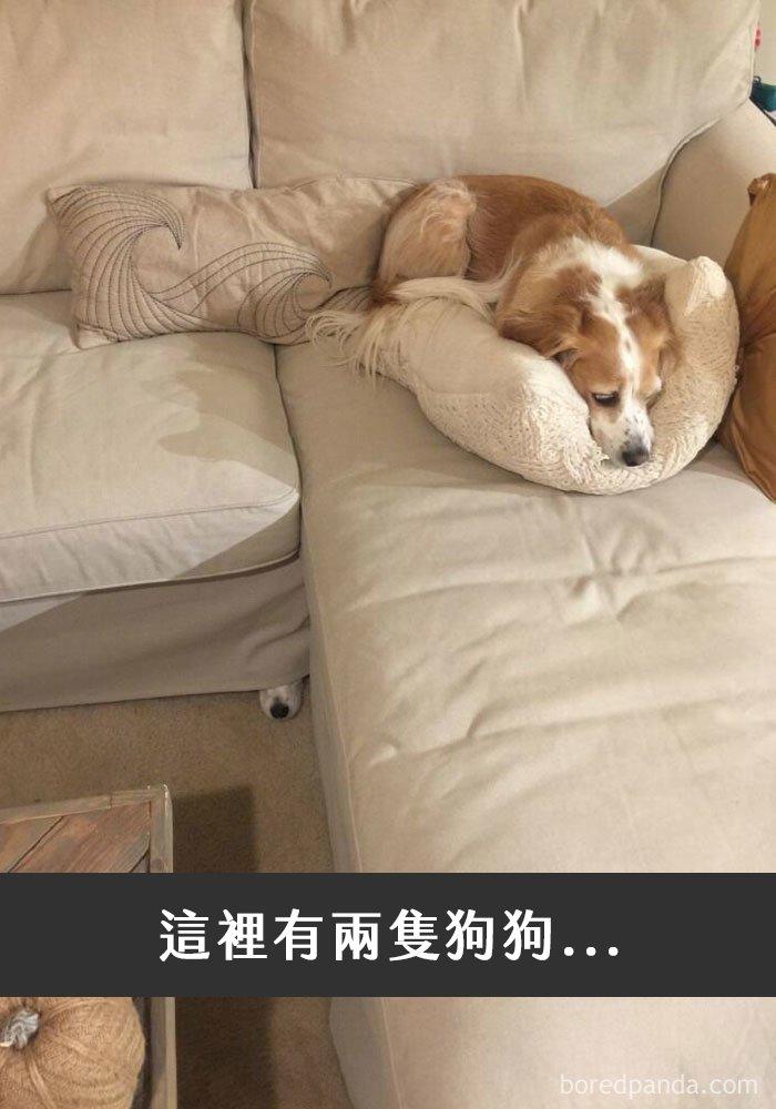 dogs-funny-snapchats-116-5a30f33fdd4f1__700