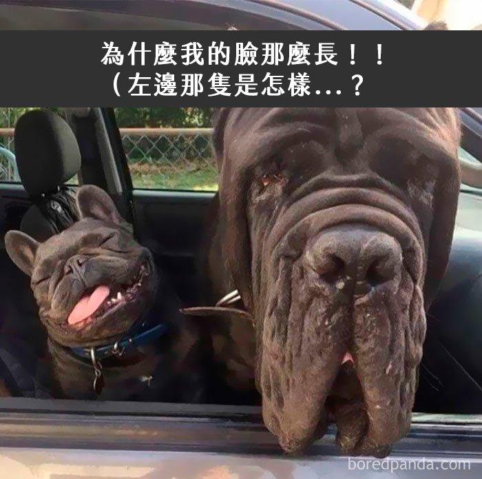 dogs-funny-snapchats-2-5a2f915bd8c9a__700