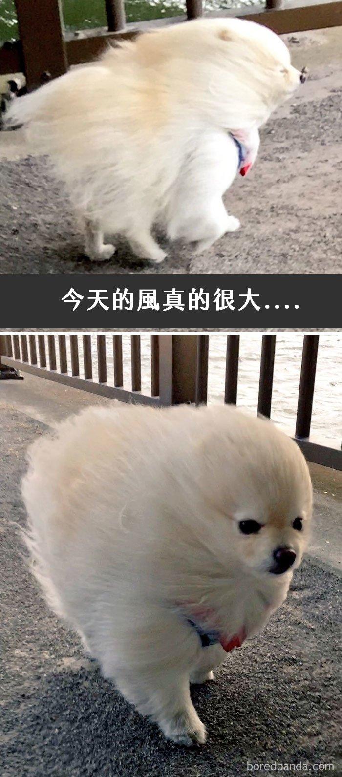 dogs-funny-snapchats-211-5a37862026dc6__700