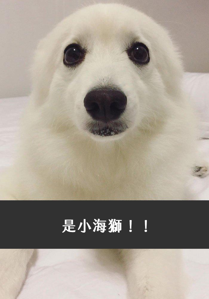 dogs-funny-snapchats-58-5a2fee2394290__700
