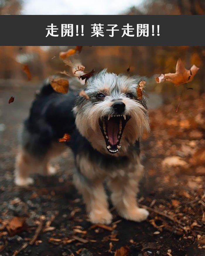 dogs-funny-snapchats-5a2f96ed29b75__700