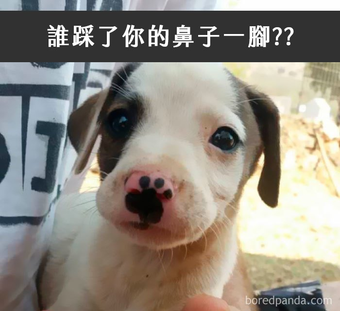 dogs-funny-snapchats-5a2f98526a0f8__700