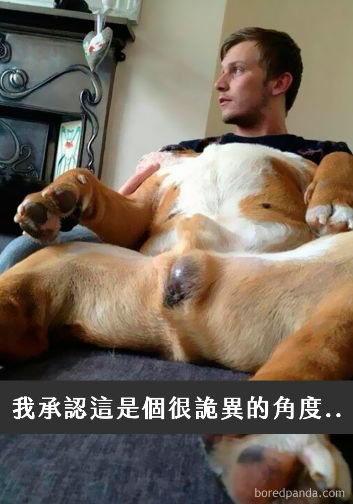 dogs-funny-snapchats-5a2f9c43c8a2a__700