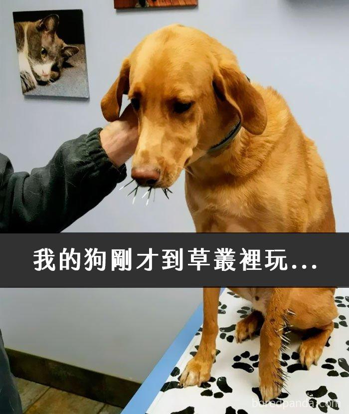 dogs-funny-snapchats-5a2f9d7bdac3d__700