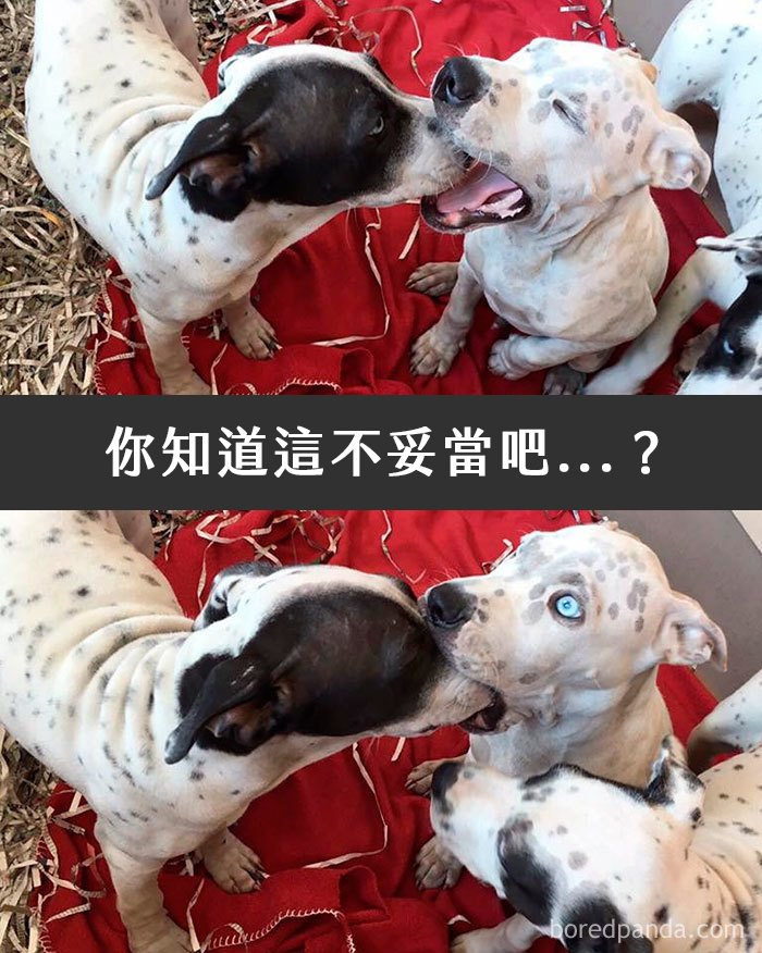 dogs-funny-snapchats-5a2f9de3bc509__700