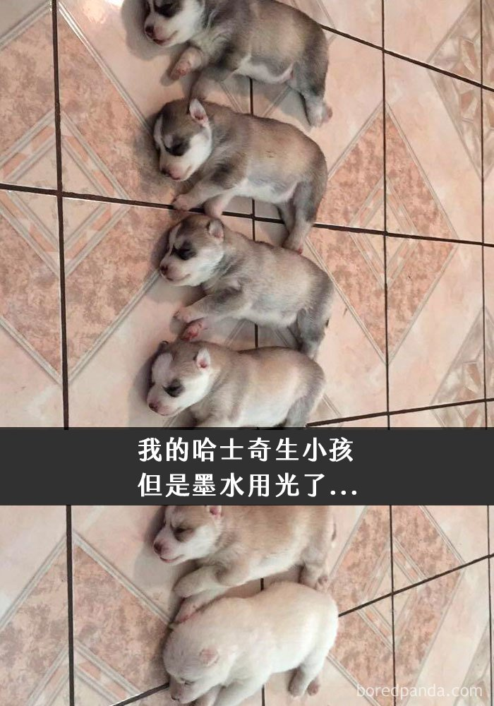 dogs-funny-snapchats-5a2faa2b4a2d6__700