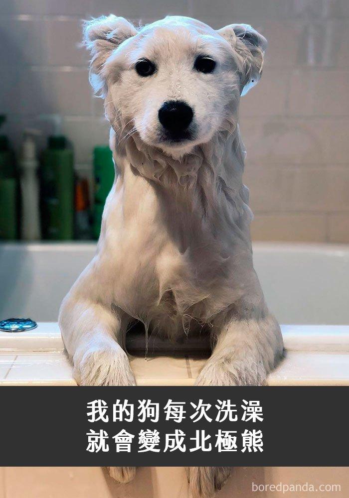 dogs-funny-snapchats-5a2fb3003705a__700