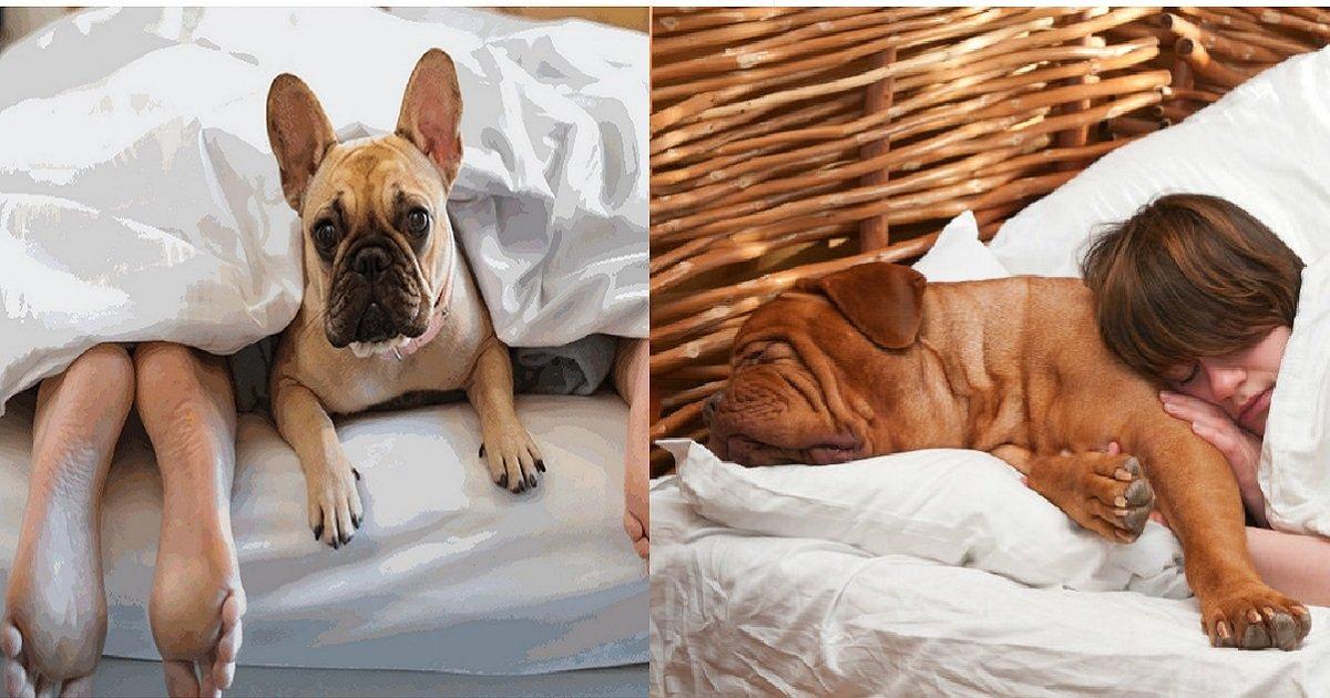 dogs sleep in bed feature.jpg?resize=412,232 - Confira os benefícios que deixar seu cachorro dormir em sua cama traz ao seu corpo e sua mente!