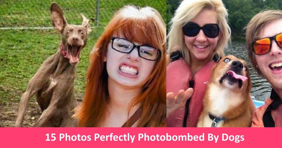 dogsphotobomb