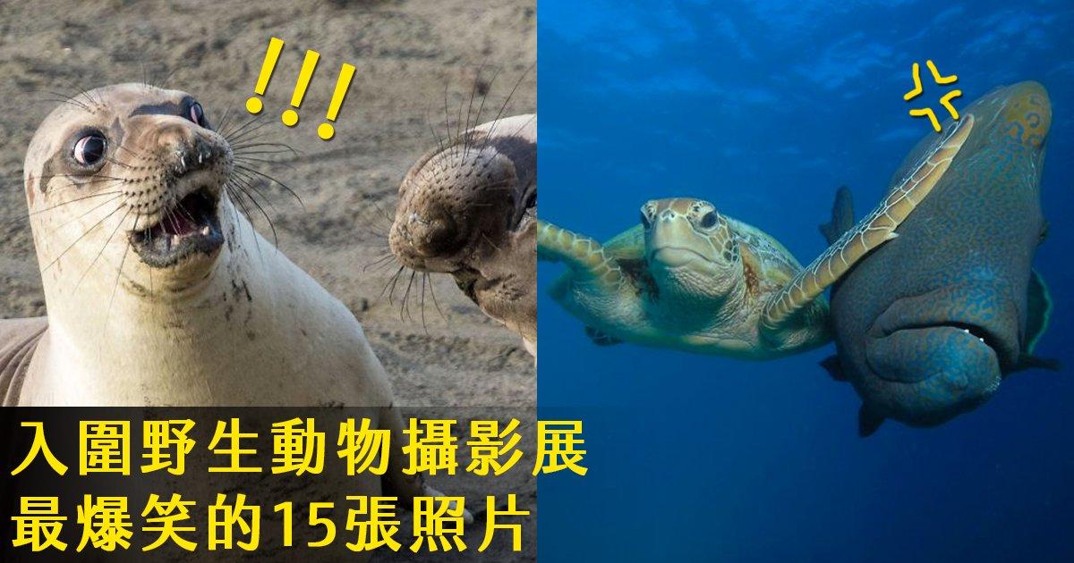 e69caae591bde5908d 1 27.png?resize=1200,630 - 15張入圍最爆笑野生動物攝影展的照片,這些動物根本喜劇演員!