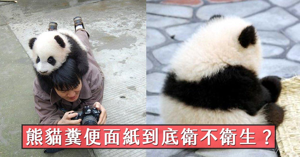 e69caae591bde5908d 1 37.png?resize=1200,630 - 熊貓糞便做成面紙要價不菲,民眾憂心衛生疑慮是否可以擦嘴?