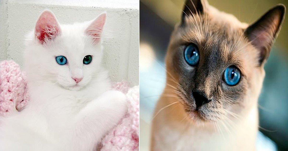 "ebacb4ec8aa8eab3a0ec9691ec9db4.jpg?resize=1200,630 - ""내 여친은 어떤 고양이?"" 성격 유형으로 알아보는 '고양이 타입' 테스트"