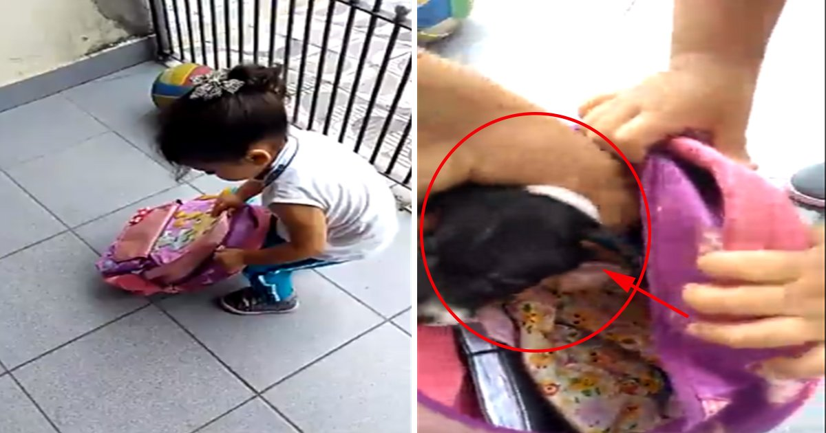ec8db8eb84a4ec9dbc2 5.jpg?resize=1200,630 - Pai flagra a filha tentando levar sua cachorrinha na mochila da escola e a reação dela é hilária!