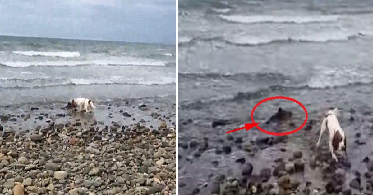 ec8db8eb84a4ec9dbc4 7.jpg?resize=412,232 - Cachorrinha ajuda a salvar um golfinho bebê que ficou preso na beira da praia