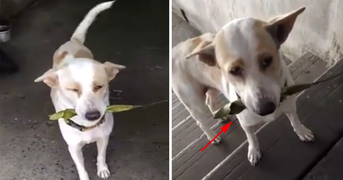 ec8db8eb84ac11 - This Cute Stray Dog Daily Brings A New Gift For The Lady Who Fed Her